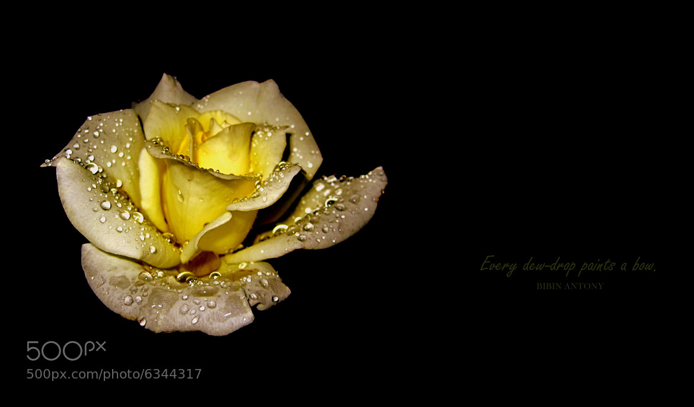 Photograph Dew Drops . . . . . by Bibin Antony on 500px