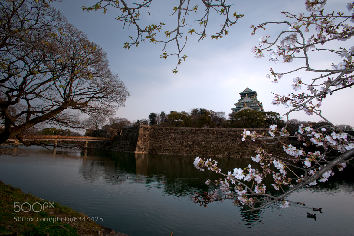 Photograph Osaka Jyo in Spring by Luca  Vaime on 500px