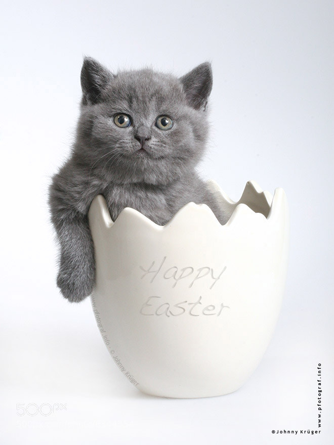 Photograph easter bunny in disguise by Johnny Krüger on 500px
