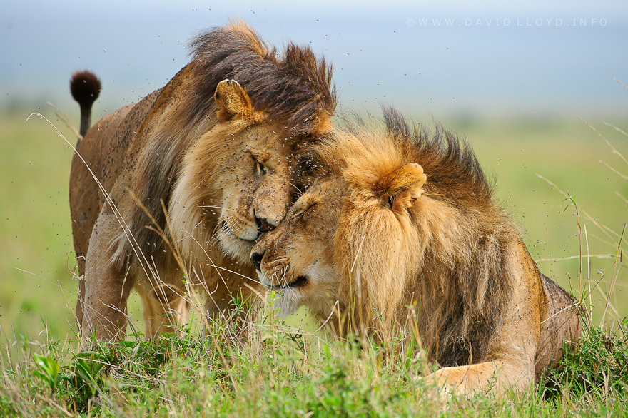 Photograph Brothers by David Lloyd on 500px
