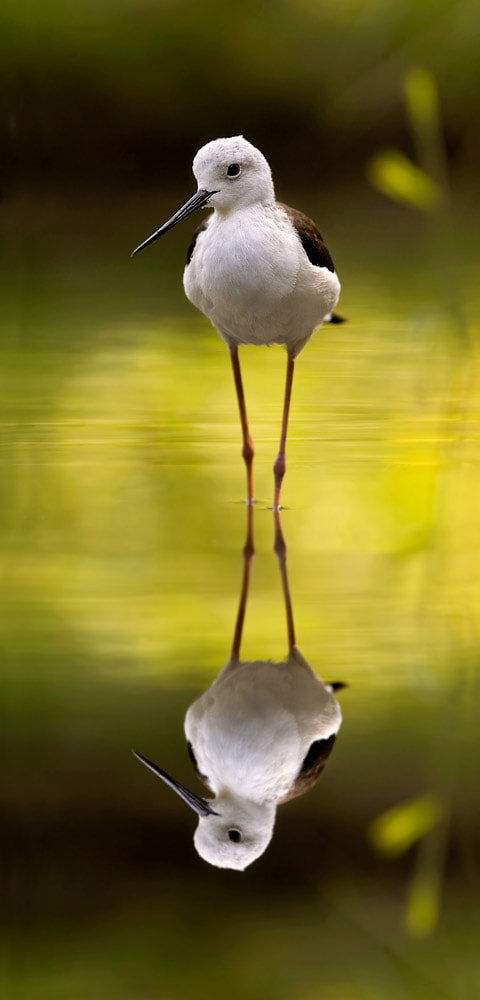 Photograph I and my reflection by Stefano Ronchi on 500px