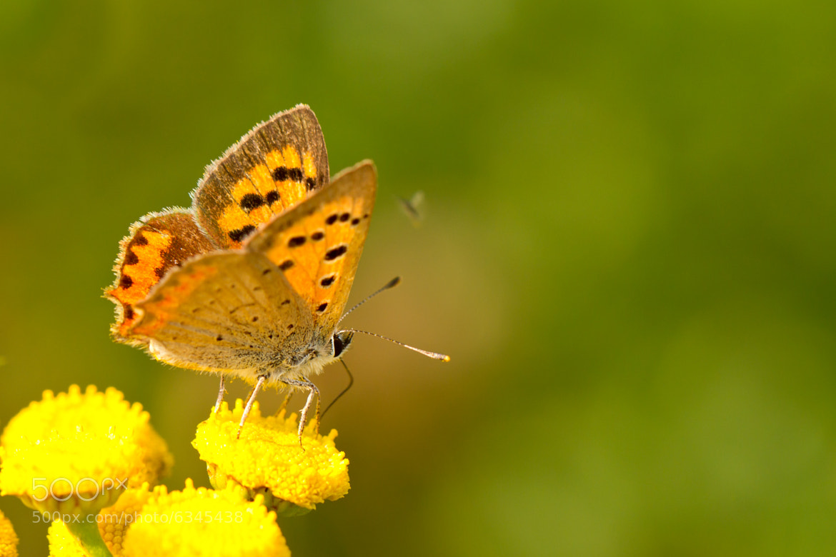 Photograph Butterfly by Markus _ on 500px