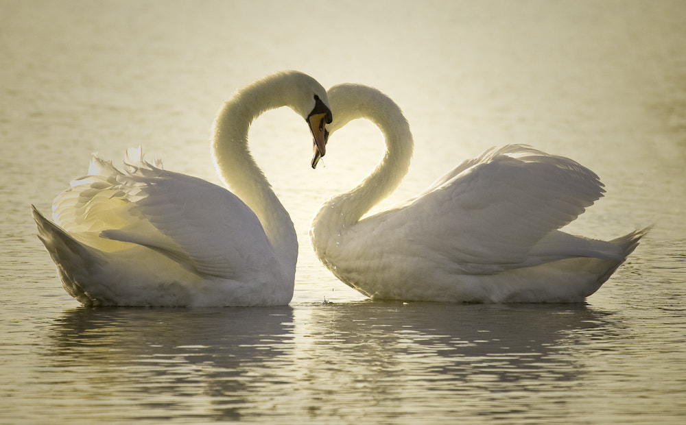 Photograph Pure love by Frank Rønsholt on 500px