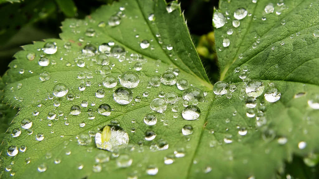 Photograph Dewdrops Dropped  by Arkadiusz Begier on 500px