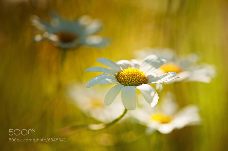 Photograph c'est le printemps ! by florence richerataux on 500px
