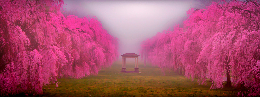 cherrys by Todd Wall on 500px.com