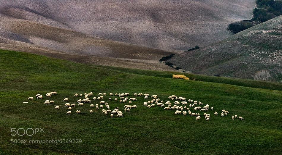 Photograph Flock by Izidor Gasperlin on 500px
