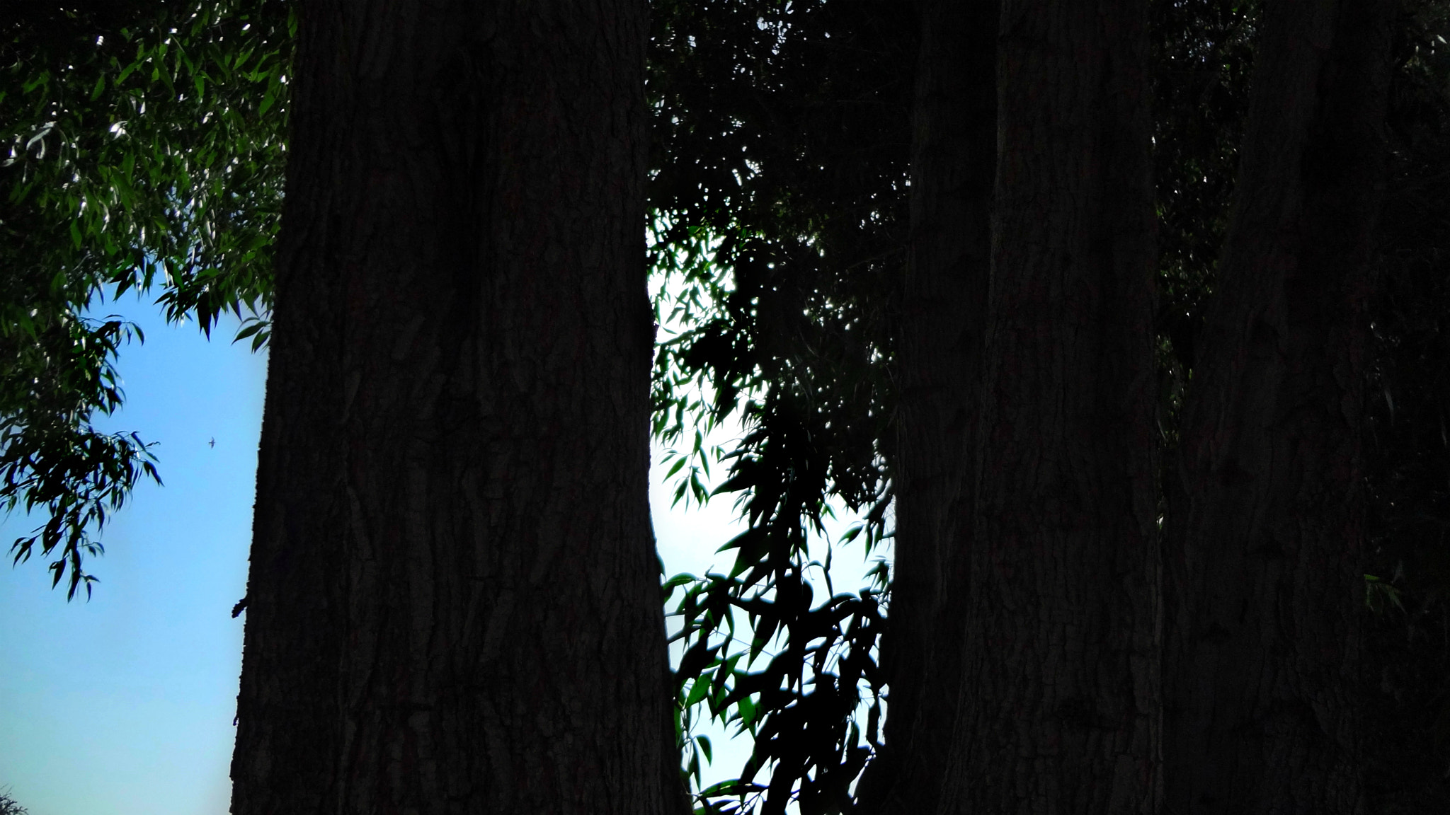 Photograph Forest by Basil Ben Varghese on 500px