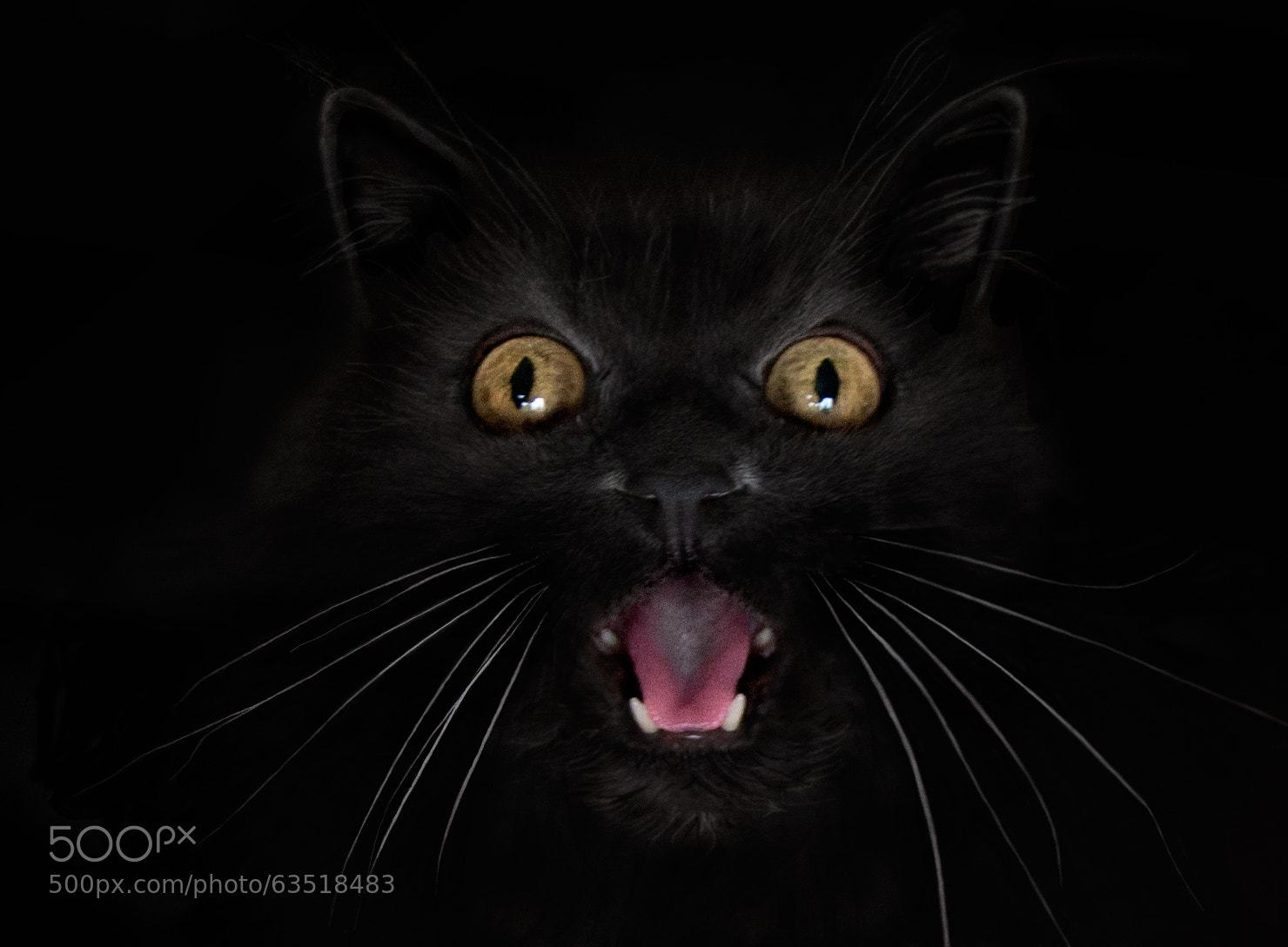 Photograph Boo!!☻ by Ӻotoαguαdo⓭   on 500px