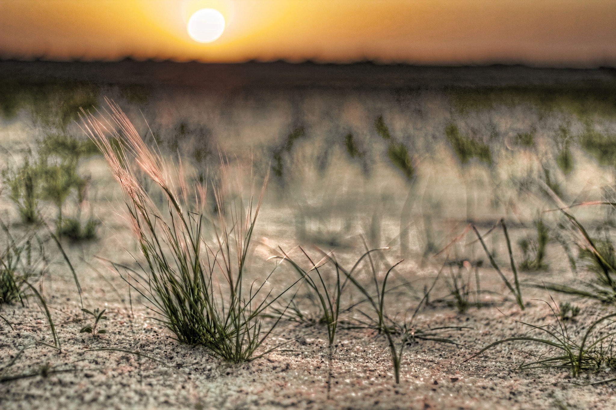 Photograph Life in the Desert by Nasser Al-Humaidi on 500px