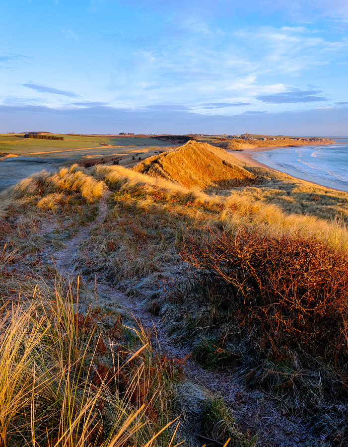 Golden Light, Embleton Dunes