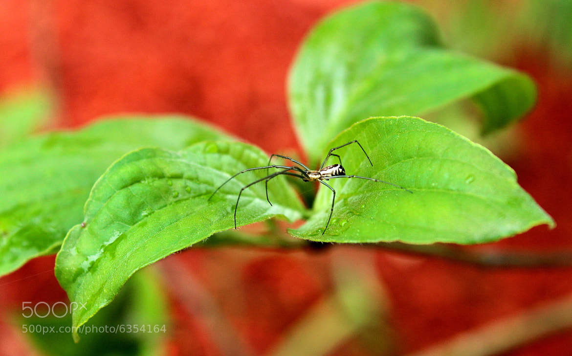 Photograph Spider on a Leaf by Patricia Martin on 500px
