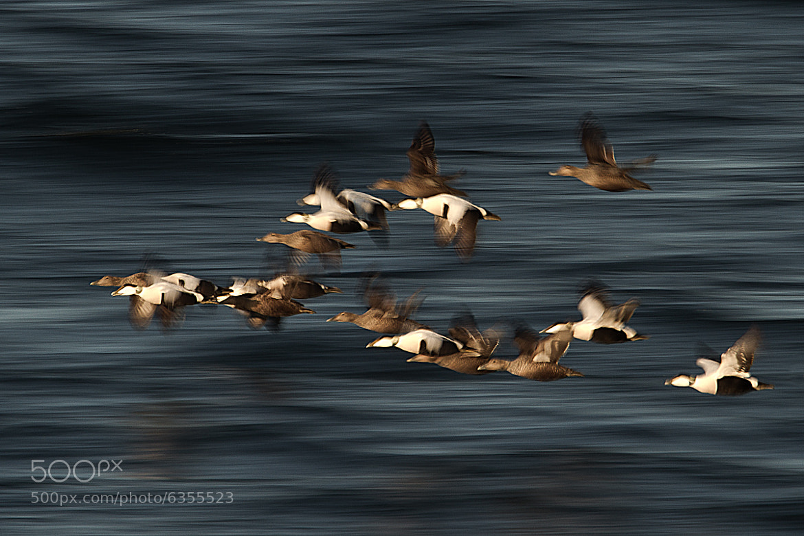Photograph Migration by Fredrik Backman on 500px