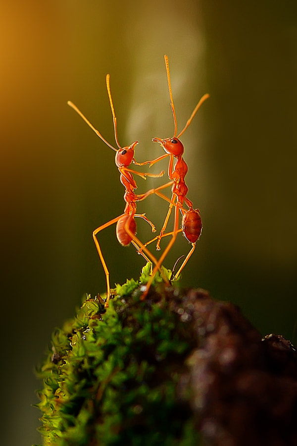 Photograph the dancing ants by Rhonny Dayusasono on 500px