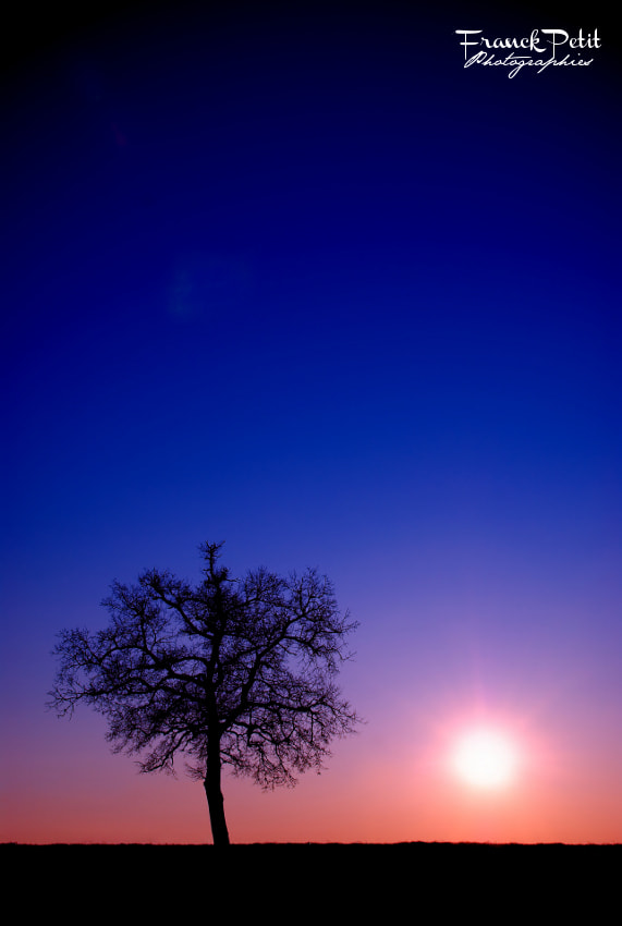 Photograph The Tree by Franck PETIT on 500px
