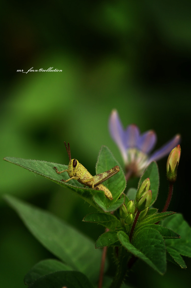 Photograph the green  by Firmansyah Firmansyah on 500px