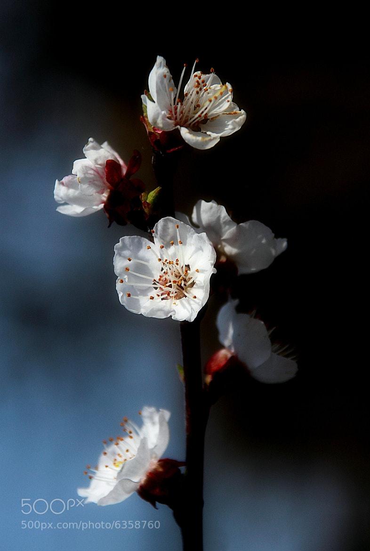 Photograph spring by stewen keresztesi on 500px