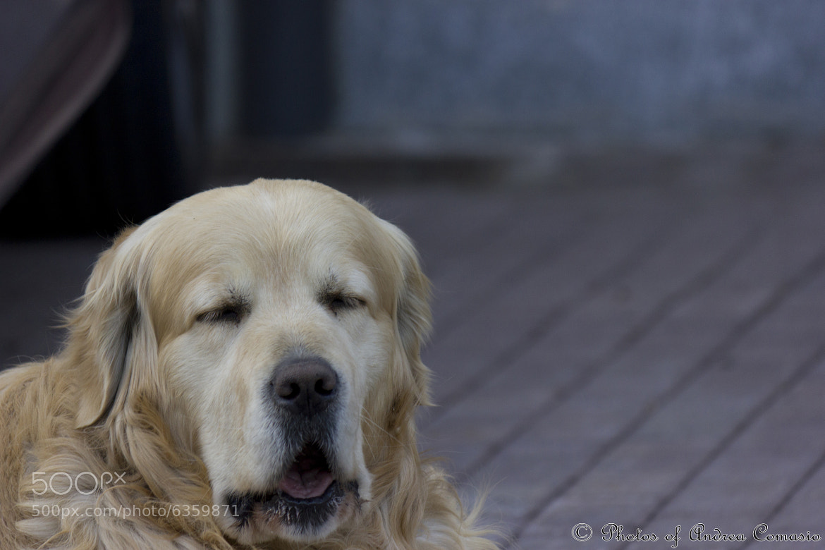 Photograph dog of Valentino's park by Andrea Comasio on 500px