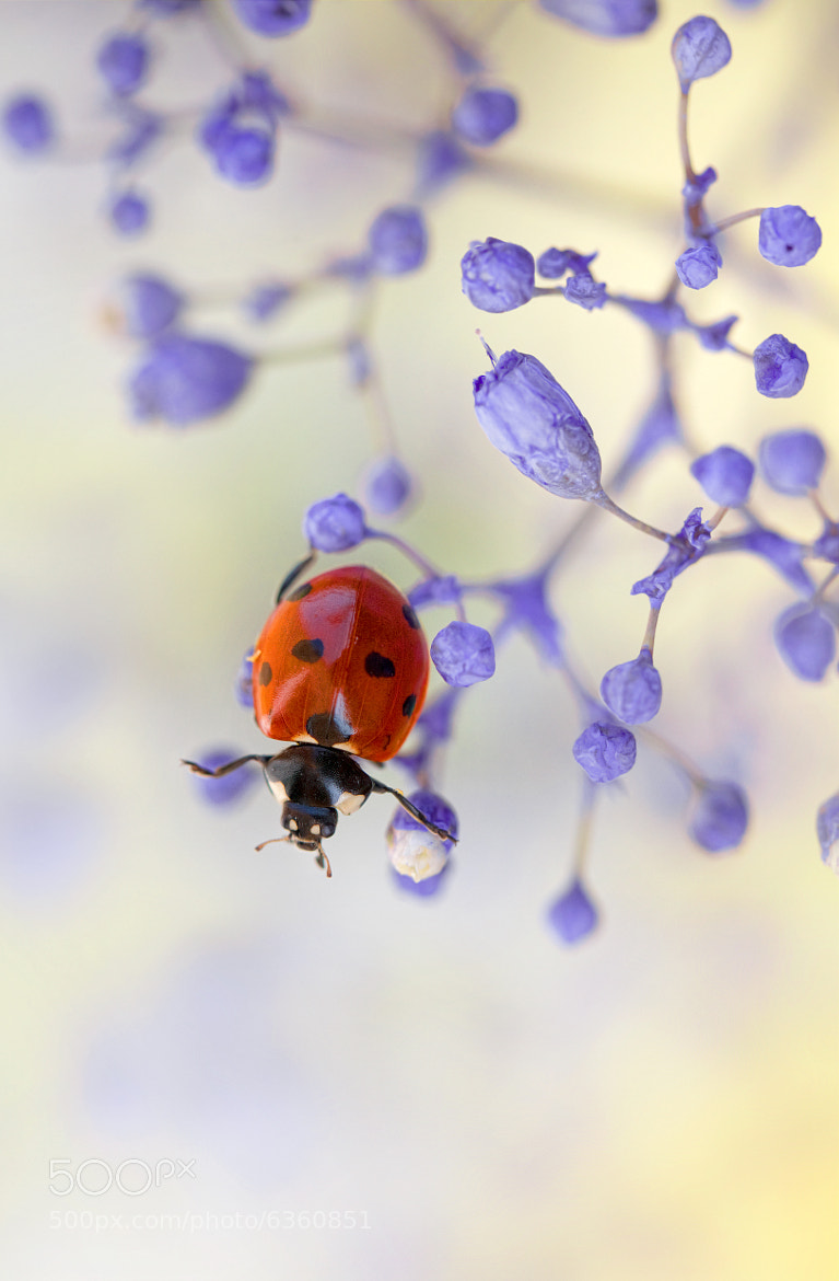 Photograph Nowhere to go by Mandy Disher on 500px