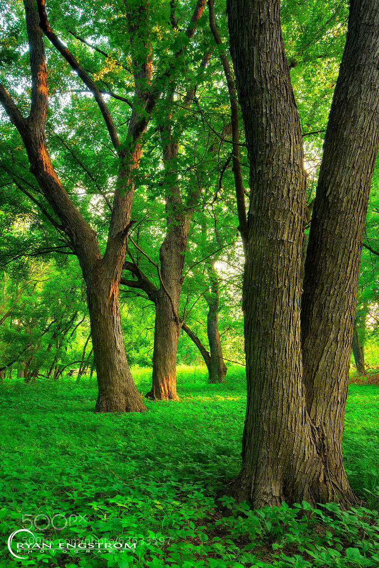 Photograph Green Carpet by Ryan Engstrom on 500px