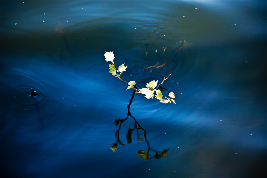 Photograph Twig on Blue by Jack Booth on 500px