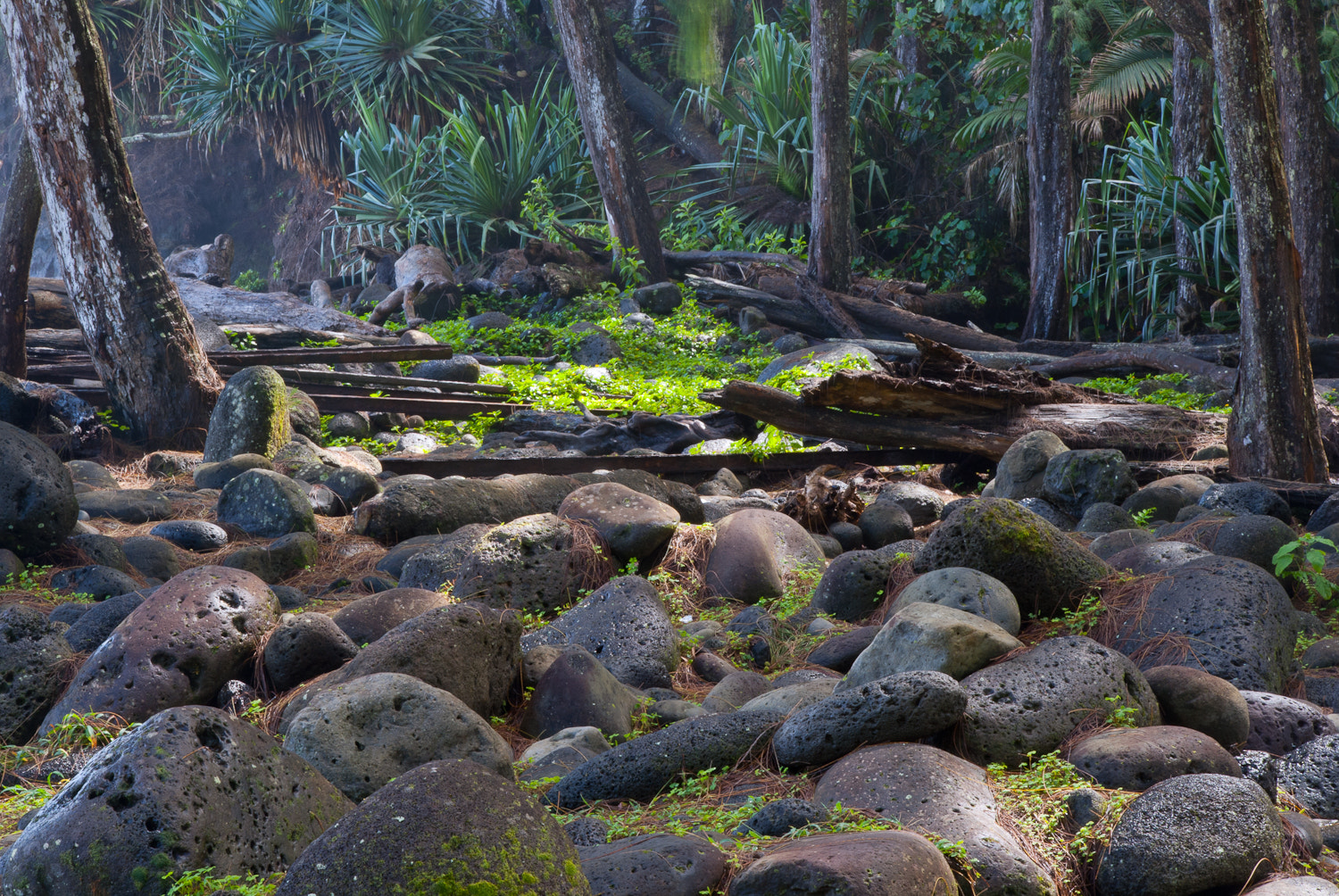 Photograph Tropical Forest by Scott Hull on 500px