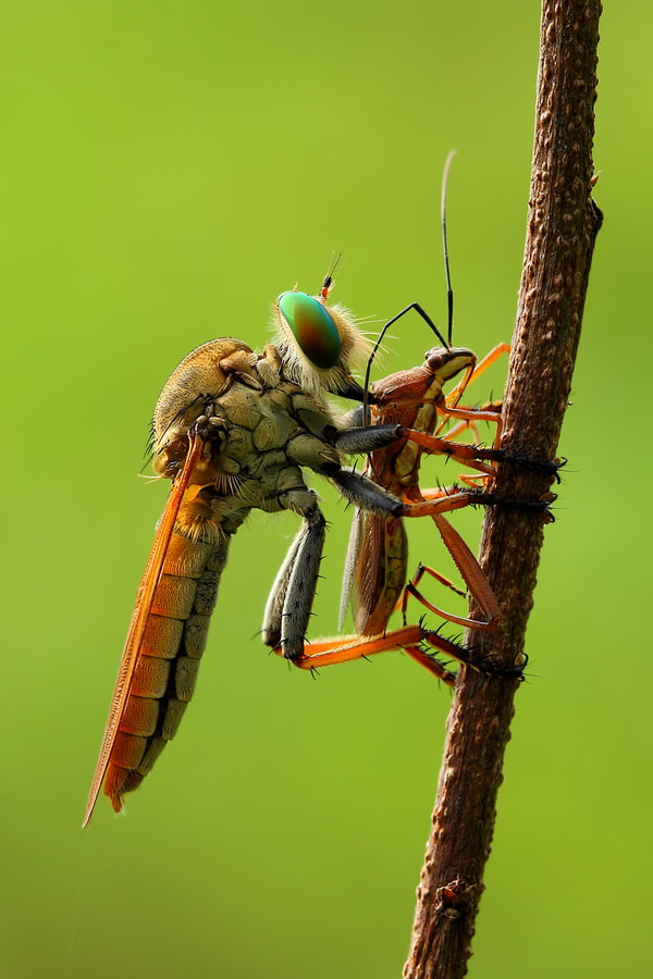 Photograph Kiss of Death by Reyki Irmawan on 500px