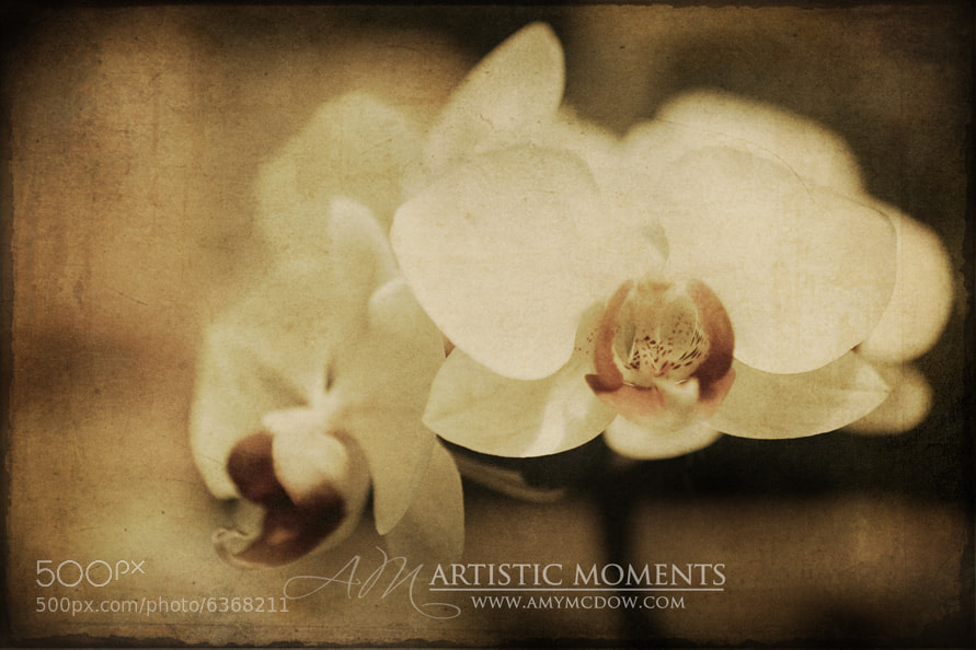 Photograph Orchid by Amy McDow on 500px
