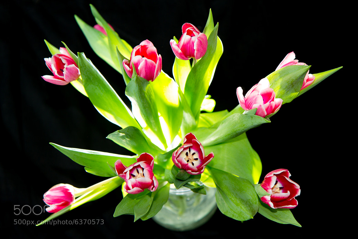 Photograph Bunch of Tulips by Manuel Brunner on 500px