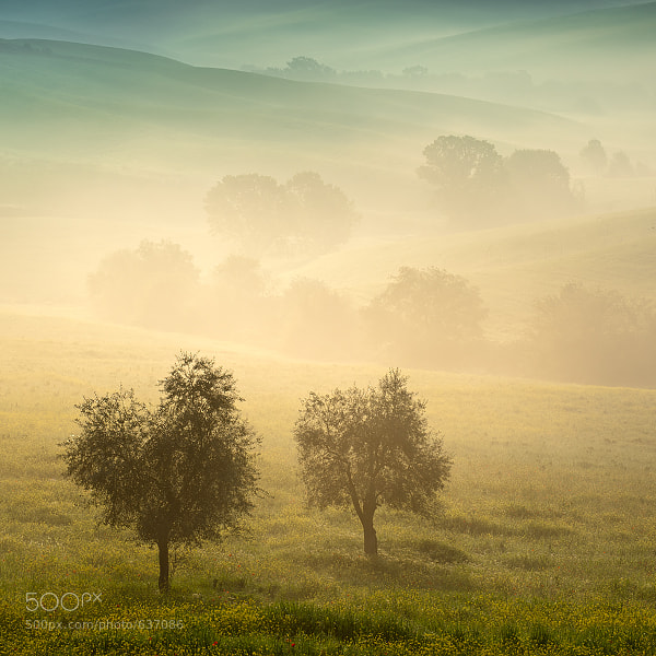 Photograph Tuscan Morning by Tomáš Morkes on 500px