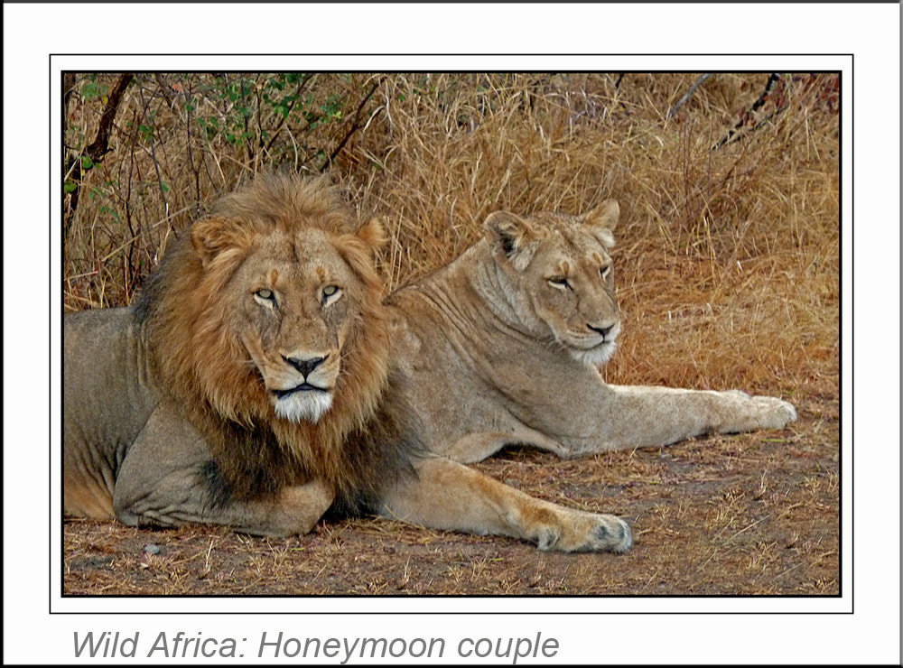 Photograph Wild Africa Honeymoon couple by Graham Turner on 500px