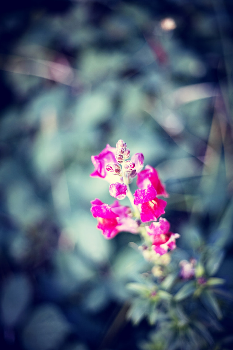 Photograph Flower by Harry Keller on 500px