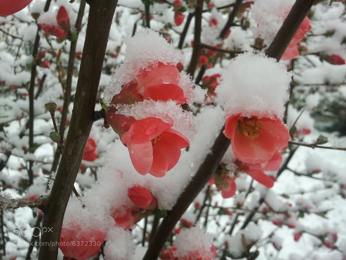 Photograph snow and flowers by mustafa guler on 500px