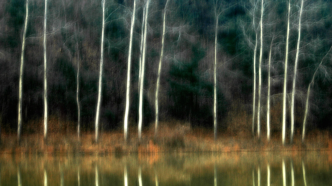 Photograph White wood by park seo jin on 500px