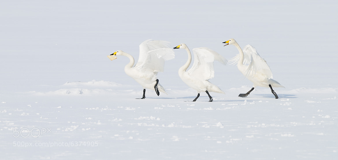 Photograph The Great Chase by Harry  Eggens on 500px