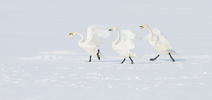The Great Chase by Harry Eggens on 500px.com