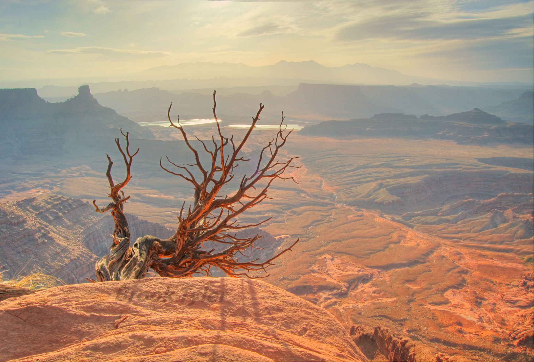 Photograph Dead tree at Dead Horse Point by Brook  Tyler on 500px