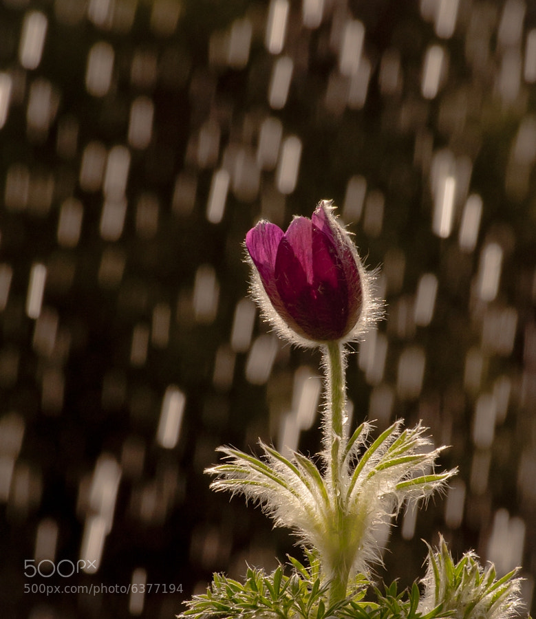 Photograph Rain-maker by Ferenc Lőrincz on 500px