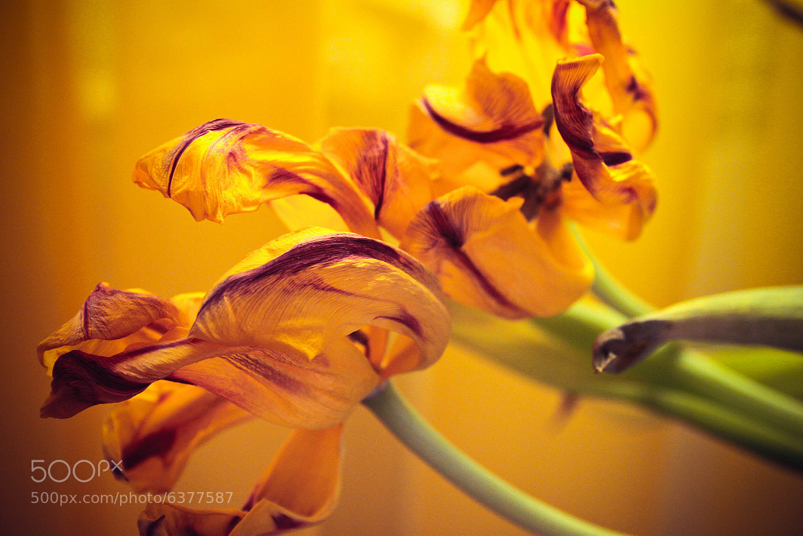 Photograph spring gifts by Arina Abramova on 500px
