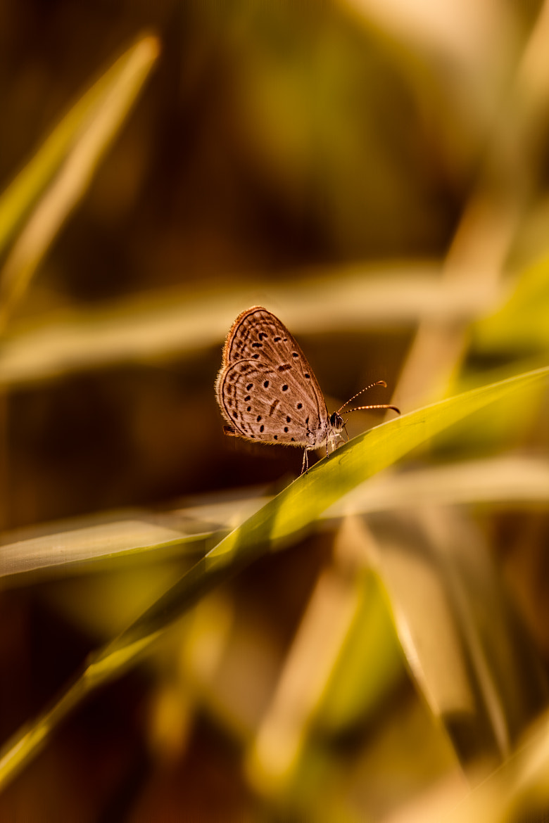 Photograph Butterfly  by Heng Buntha on 500px