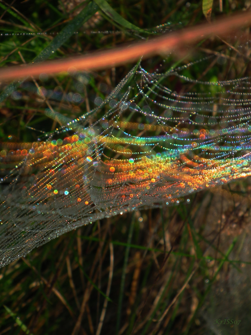 Photograph Colours of the web by KrISS Ch. on 500px