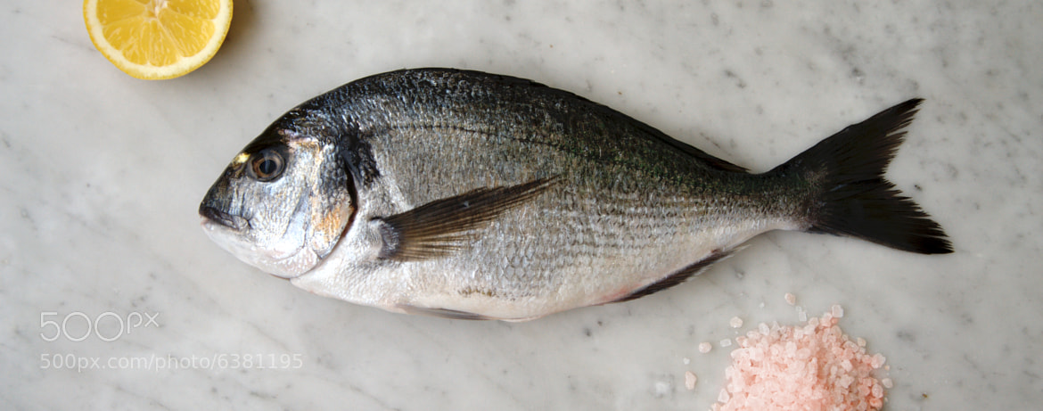 Photograph Orata - Sea bream by Silvio Guala on 500px