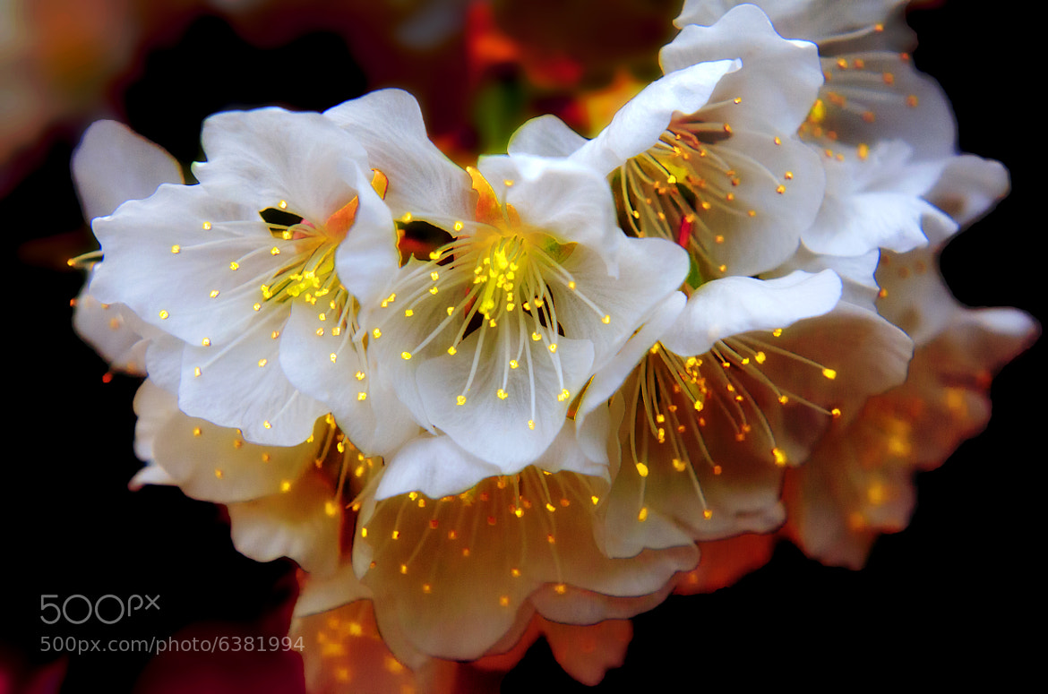 Photograph Cherries Lights by Gilles_M  on 500px