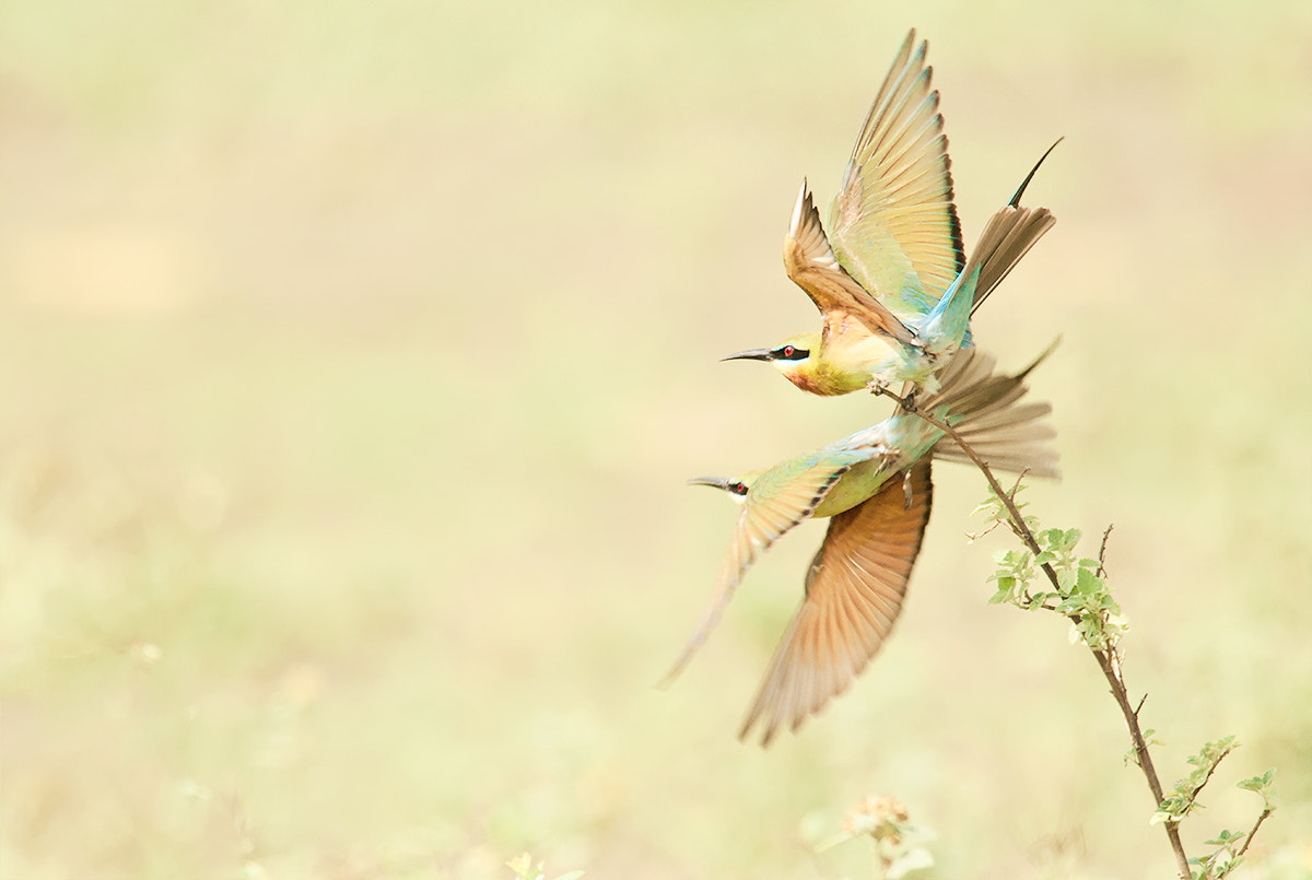 Photograph Let me fly  by Praphat Rattanayanon on 500px