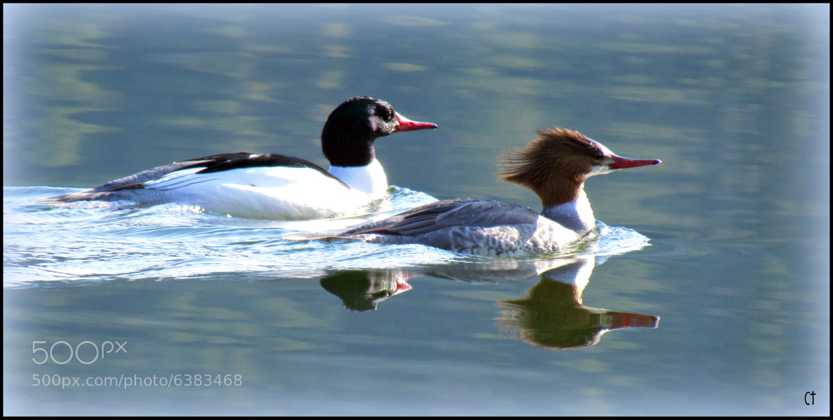 Photograph Mr. & Mrs. Common by colleen thurgood on 500px