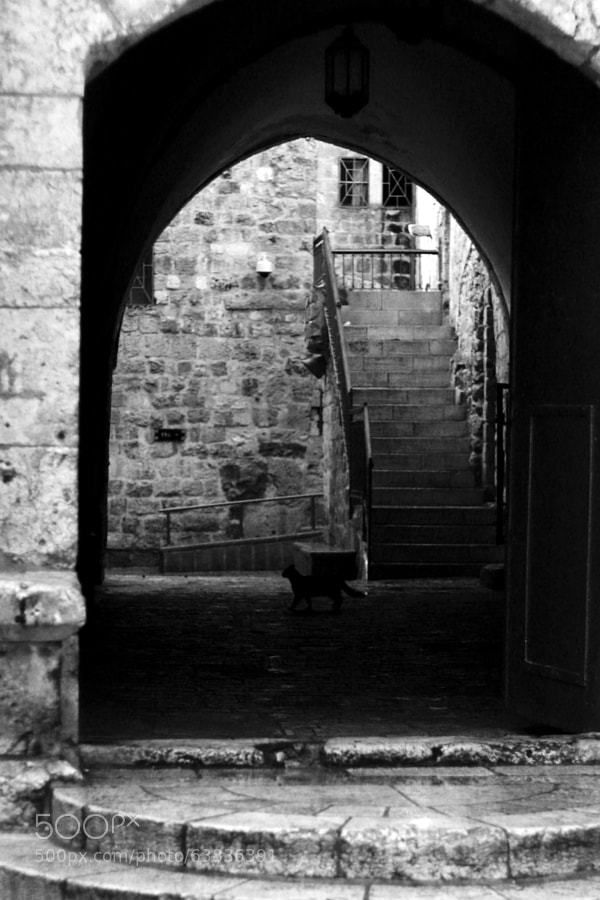 Photograph Cat Outside King David's Tomb by Jeff Carter on 500px