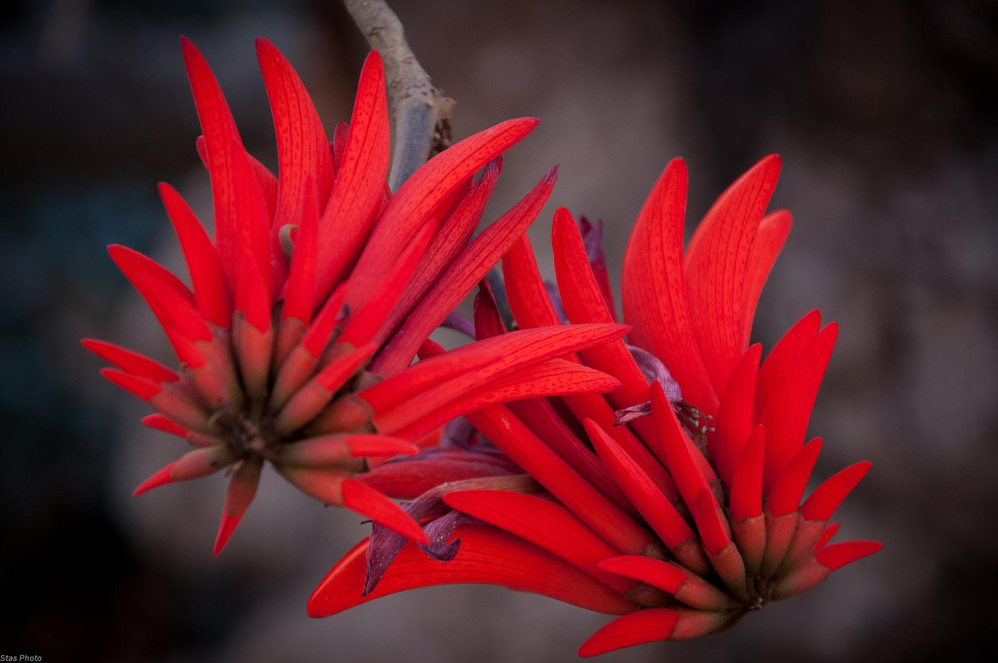 Photograph Flowers by Stas Lisnyak on 500px
