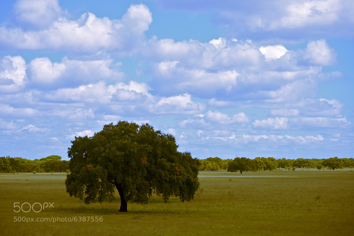 Photograph Alentejo by Rui Caria on 500px
