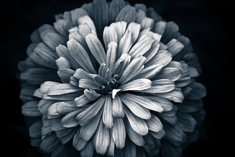 Photograph Steel petals by Uday Gajendar on 500px