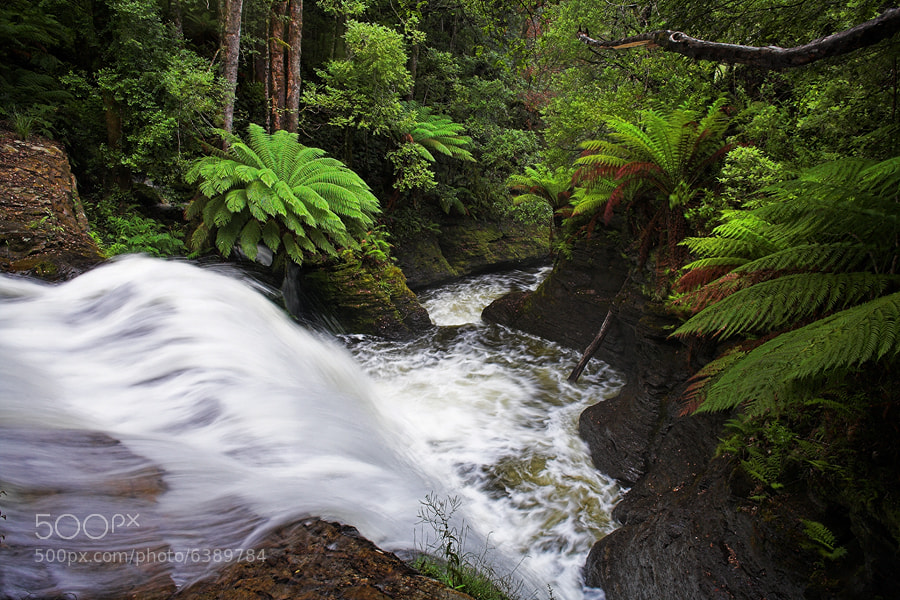 Photograph Liffey Falls by Peter Daalder on 500px